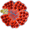 Bella Crystal Ball Marker - Red Hibiscus